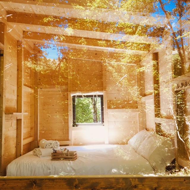 cabina di legno nel bosco con una parete a vetro che si affaccia nel bosco